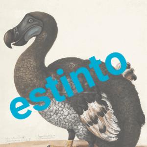 I fondi di investimento rischiano di fare la fine del dodo?